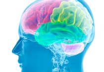 neurologie adulte